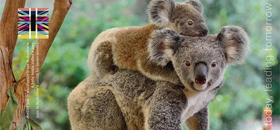Carpetas nuevas con foto de koala